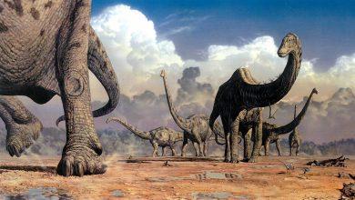 Photo of آیا حیات به شکل تصادفی روی زمین شکل گرفته است؟تام دیکسون