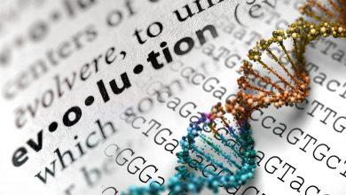 Photo of تکامل و چالش پیچیدگی کاهشناپذیرارکی وسا راپ کوژنن/ ترجمه: امیر مسعود جهانبین