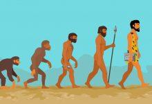 Photo of انسان در بستر  تکامل